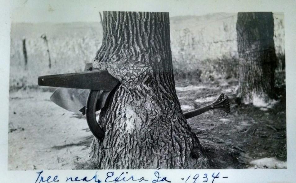 Tree Near Exira Iowa 1934